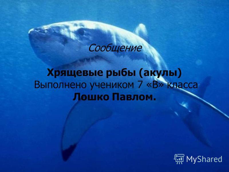 презентация акулы 7 класс
