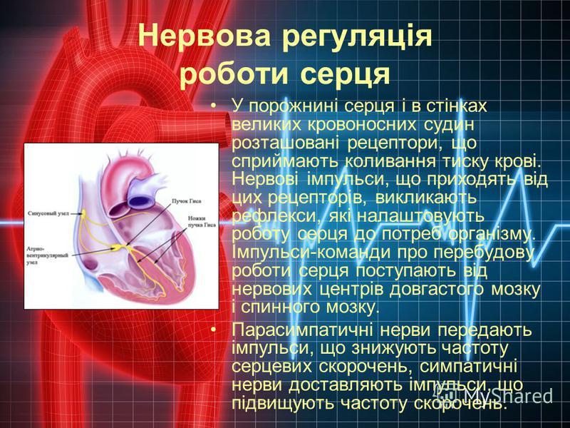 Нервова регуляція роботи серця У порожнині серця і в стінках великих кровоносних судин розташовані рецептори, що сприймають коливання тиску крові. Нервові імпульси, що приходять від цих рецепторів, викликають рефлекси, які налаштовують роботу серця д