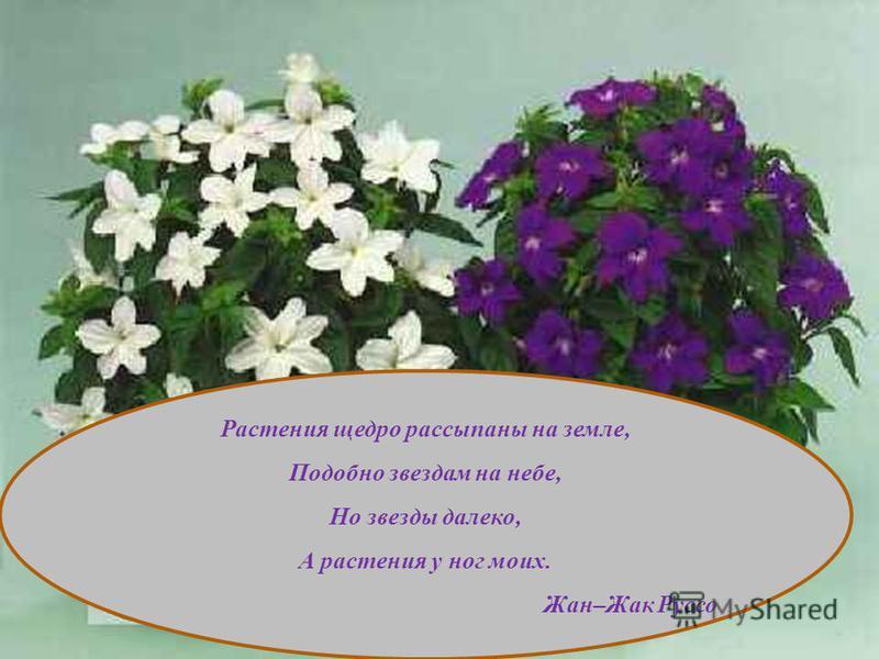Растения щедро рассыпаны на земле, Подобно звездам на небе, Но звезды далеко, А растения у ног моих. Жан–Жак Руссо