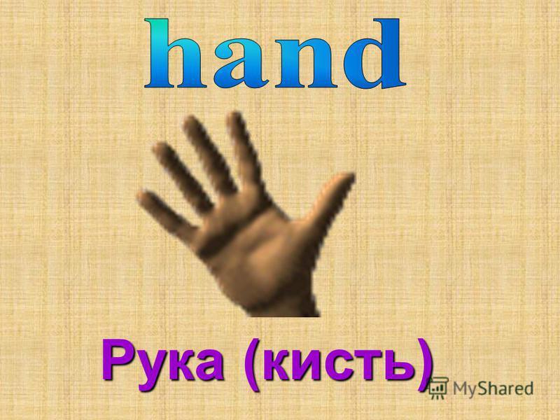 Рука (кисть)