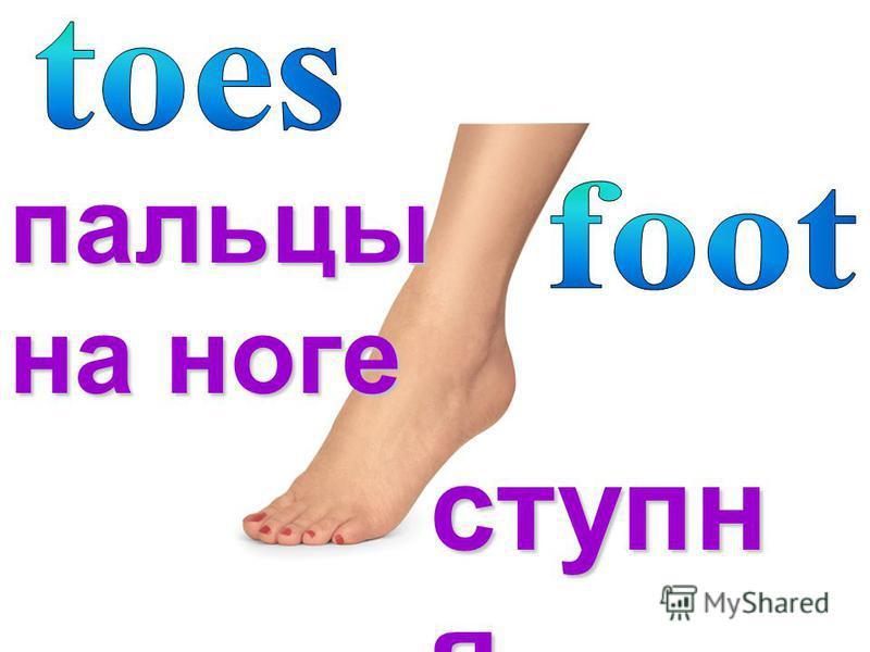 ступня пальцы на ноге