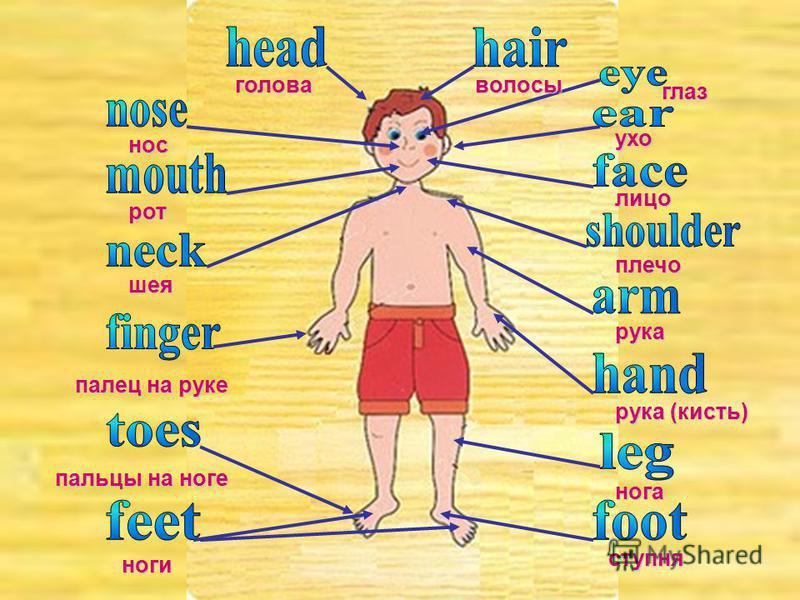 голова волосы нос глаз ухо рот лицо шея плечо рука рука (кисть) палец на руке нога пальцы на ноге ступня ноги