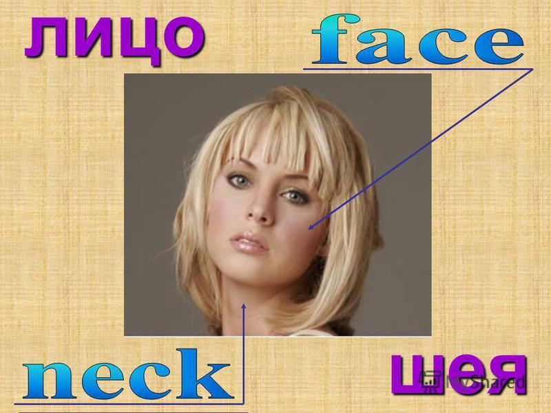 лицо шея