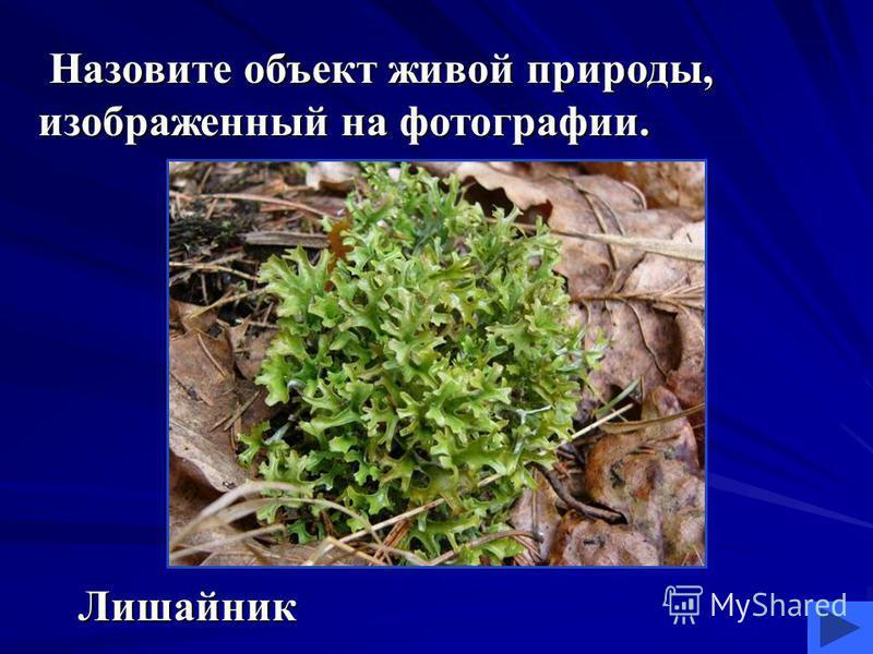 Назовите объект живой природы, изображенный на фотографии. Назовите объект живой природы, изображенный на фотографии. Лишайник Лишайник