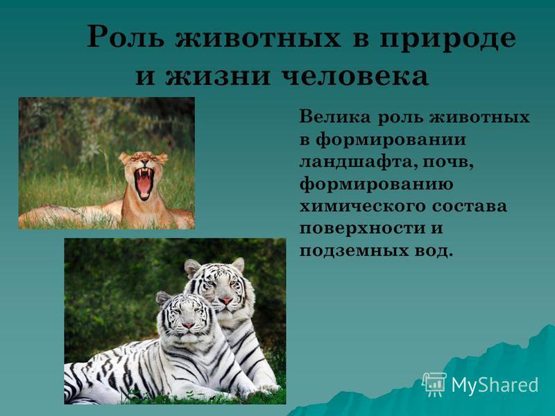 Роль животных в природе и жизни человека Велика роль животных в формировании ландшафта, почв, формированию химического состава поверхности и подземных вод..