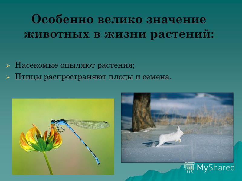 Особенно велико значение животных в жизни растений: Насекомые опыляют растения; Птицы распространяют плоды и семена.