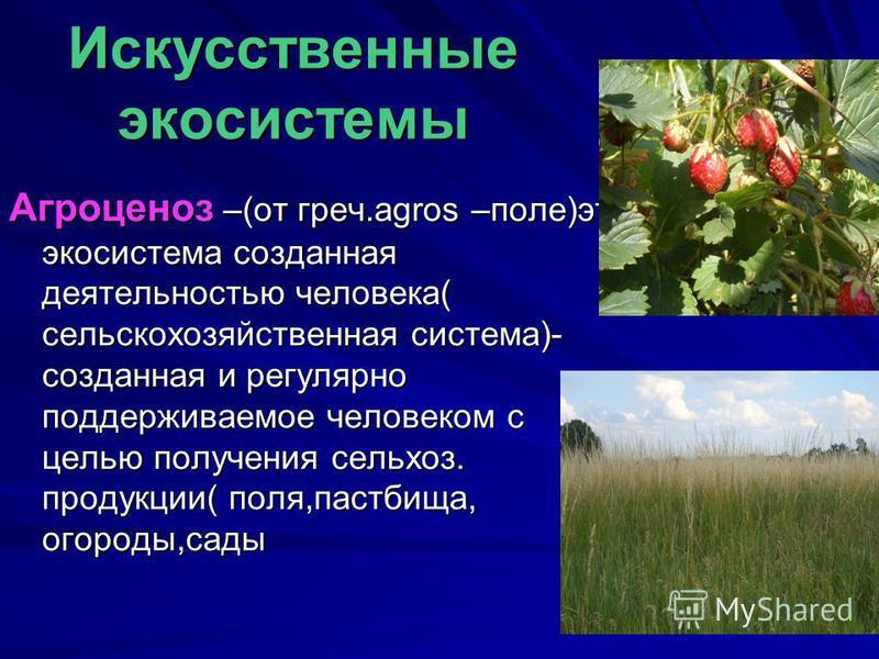 Искусственные экосистемы Агроценоз –(от греч.agros –поле)это экосистема созданная деятельностью человека( сельскохозяйственная система)- созданная и регулярно поддерживаемое человеком с целью получения сельхоз. продукции( поля,пастбища, огороды,сады