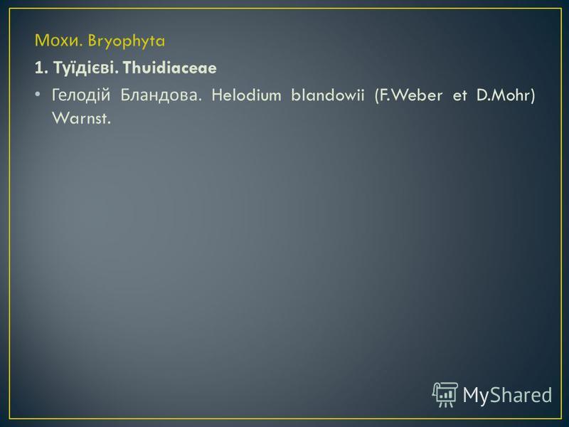 Мохи. Bryophyta 1. Туїдієві. Thuidiaceae Гелодій Бландова. Helodium blandowii (F.Weber et D.Mohr) Warnst.