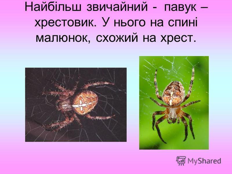 Найбільш звичайний - павук – хрестовик. У нього на спині малюнок, схожий на хрест.