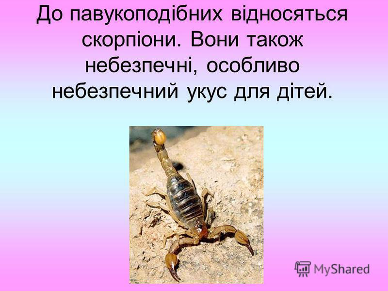 До павукоподібних відносяться скорпіони. Вони також небезпечні, особливо небезпечний укус для дітей.