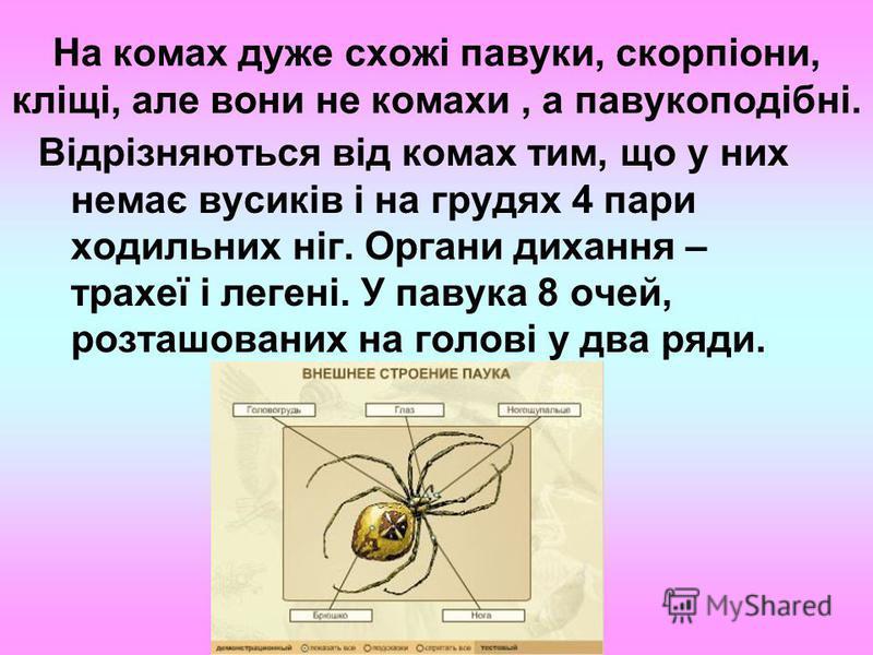 На комах дуже схожі павуки, скорпіони, кліщі, але вони не комахи, а павукоподібні. Відрізняються від комах тим, що у них немає вусиків і на грудях 4 пари ходильних ніг. Органи дихання – трахеї і легені. У павука 8 очей, розташованих на голові у два р