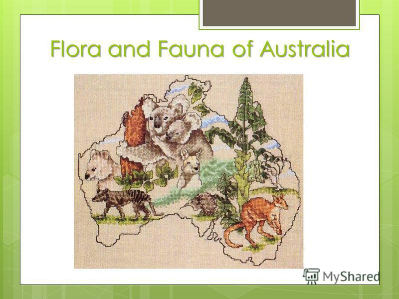 Flora and Fauna of Australia