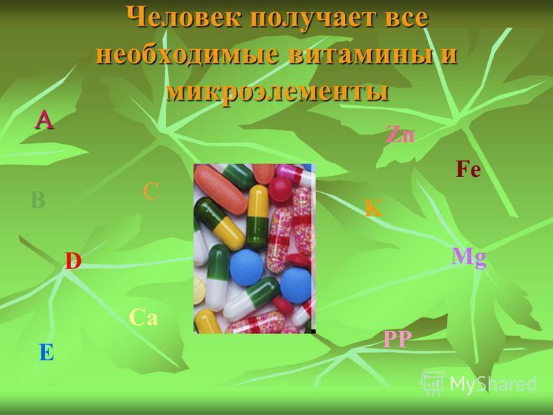 Человек получает все необходимые витамины и микроэлементы А C B D E Ca Zn Fe K Mg PP