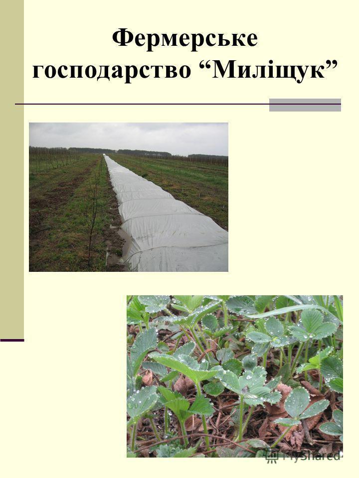 Фермерське господарство Миліщук