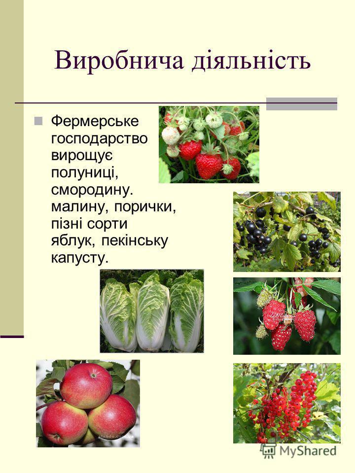 Виробнича діяльність Фермерське господарство вирощує полуниці, смородину. малину, порички, пізні сорти яблук, пекінську капусту.
