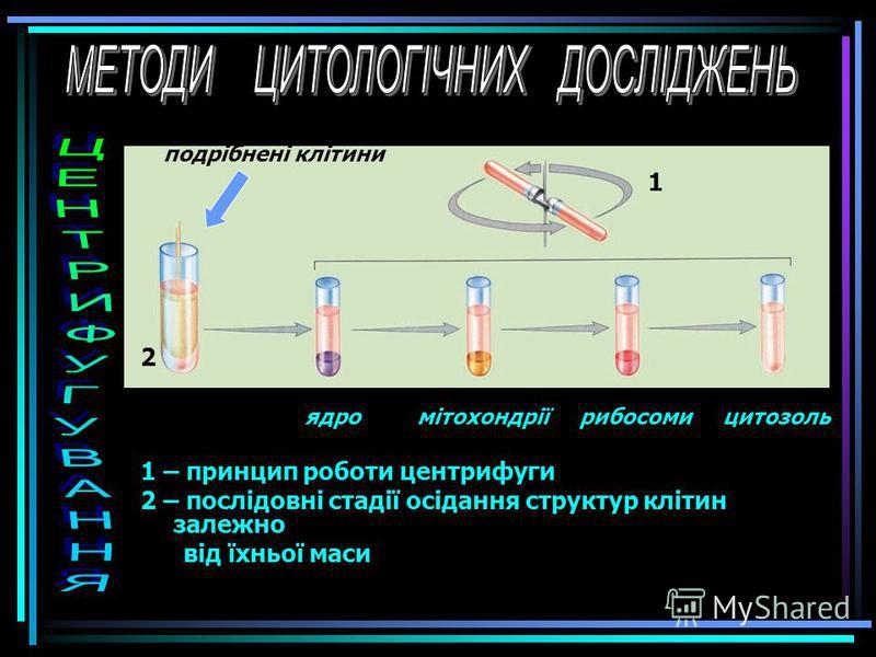 Метод мічених атомів, або авторадіографія, дає змогу зясувати місце та перебіг певних фізико-хімічних явищ у клітині. Для цього до клітини вводять речовину, в якій один з атомів певного елемента заміщений його радіоактивним ізотопом