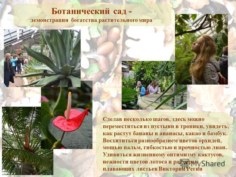Ботанический сад - демонстрация богатства растительного мира Сделав несколько шагов, здесь можно переместиться из пустыни в тропики, увидеть, как растут бананы и ананасы, какао и бамбук. Восхититься разнообразием цветов орхидей, мощью пальм, гибкость