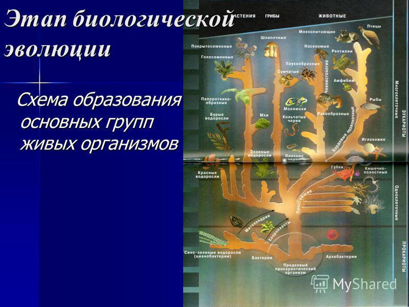 Этап биологической эволюции Схема образования основных групп живых организмов Схема образования основных групп живых организмов
