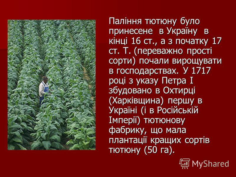 Паління тютюну було принесене в Україну в кінці 16 ст., а з початку 17 ст. Т. (переважно прості сорти) почали вирощувати в господарствах. У 1717 році з указу Петра І збудовано в Охтирці (Харківщина) першу в Україні (і в Російській Імперії) тютюнову ф