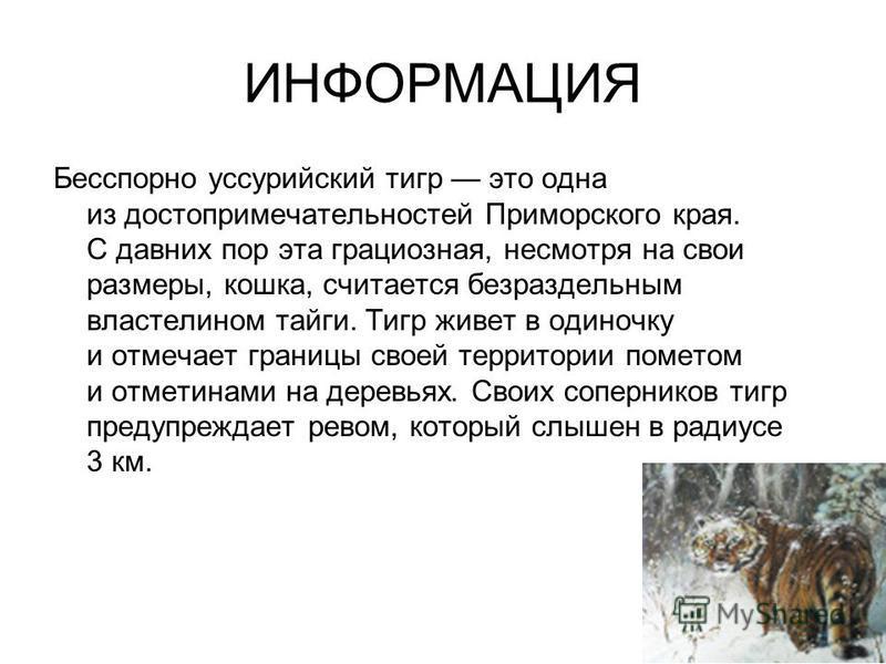 ИНФОРМАЦИЯ Бесспорно уссурийский тигр это одна из достопримечательностей Приморского края. С давних пор эта грациозная, несмотря на свои размеры, кошка, считается безраздельным властелином тайги. Тигр живет в одиночку и отмечает границы своей террито