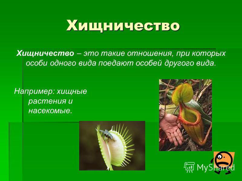 Хищничество Хищничество – это такие отношения, при которых особи одного вида поедают особей другого вида. Например: хищные растения и насекомые.