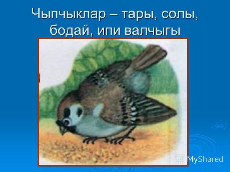 Чыпчыклар – тары, солы, бодай, ипи валчыгы