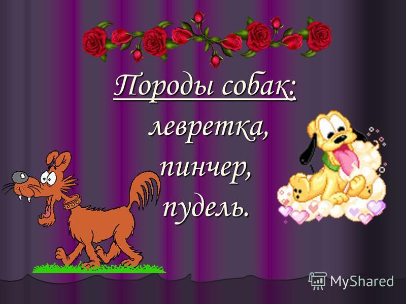 Породы собак: левретка, пинчер, пудель.