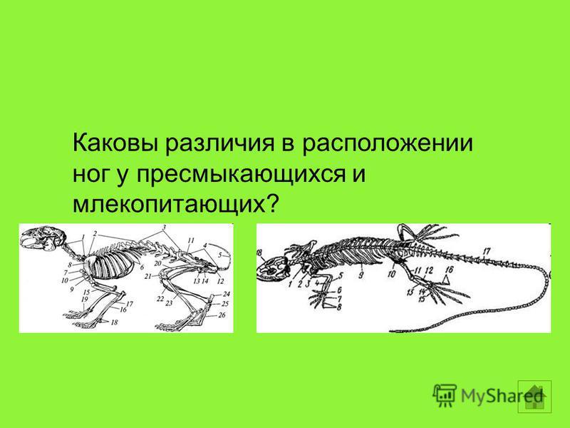 Каковы различия в расположении ног у пресмыкающихся и млекопитающих?