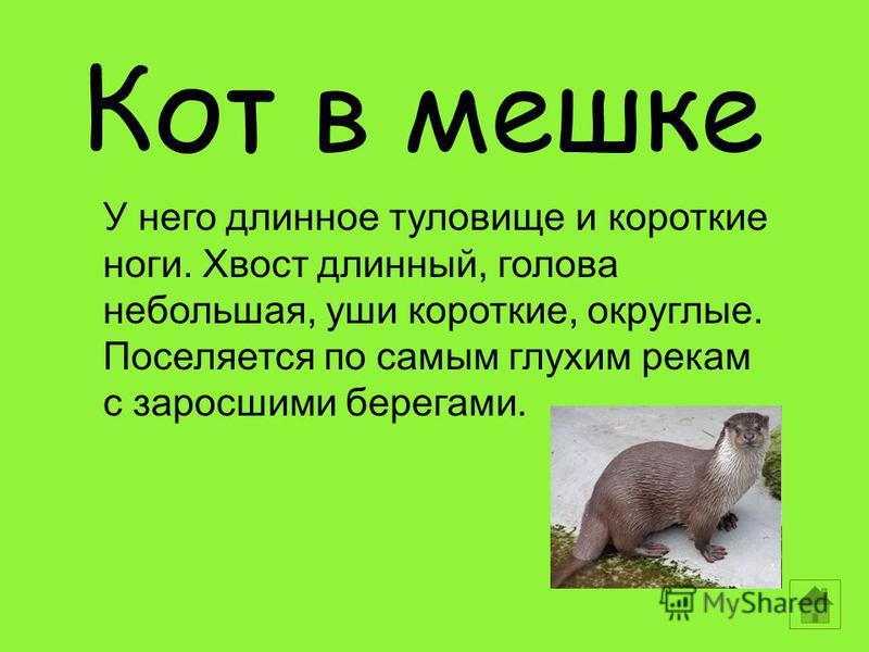 Кот в мешке У него длинное туловище и короткие ноги. Хвост длинный, голова небольшая, уши короткие, округлые. Поселяется по самым глухим рекам с заросшими берегами.