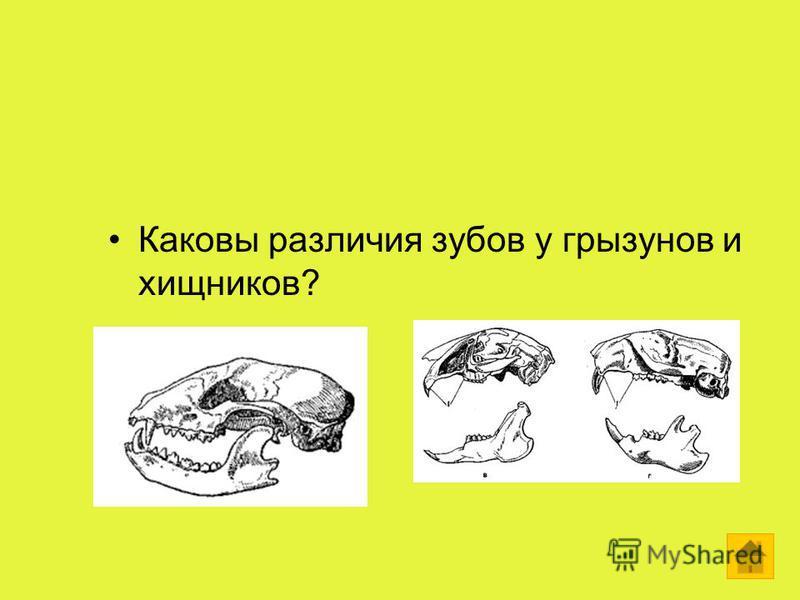 Каковы различия зубов у грызунов и хищников?