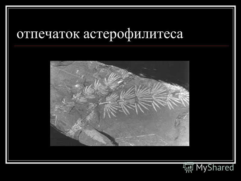 отпечаток астерофилитеса