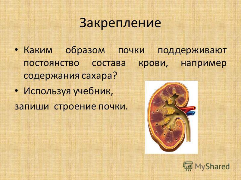 Закрепление Каким образом почки поддерживают постоянство состава крови, например содержания сахара? Используя учебник, запиши строение почки.