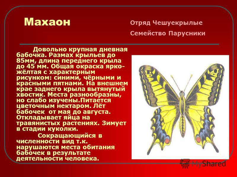 Махаон Довольно крупная дневная бабочка. Размах крыльев до 85 мм, длина переднего крыла до 45 мм. Общая окраска ярко- жёлтая с характерным рисунком: синими, чёрными и красными пятнами. На внешнем крае заднего крыла вытянутый хвостик. Места разнообраз