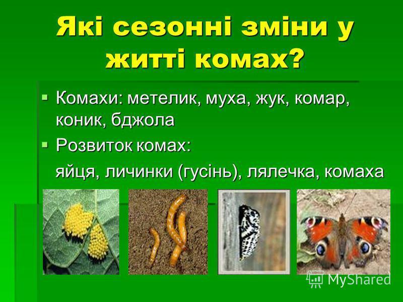 Які сезонні зміни у житті комах? Комахи: метелик, муха, жук, комар, коник, бджола Комахи: метелик, муха, жук, комар, коник, бджола Розвиток комах: Розвиток комах: яйця, личинки (гусінь), лялечка, комаха яйця, личинки (гусінь), лялечка, комаха