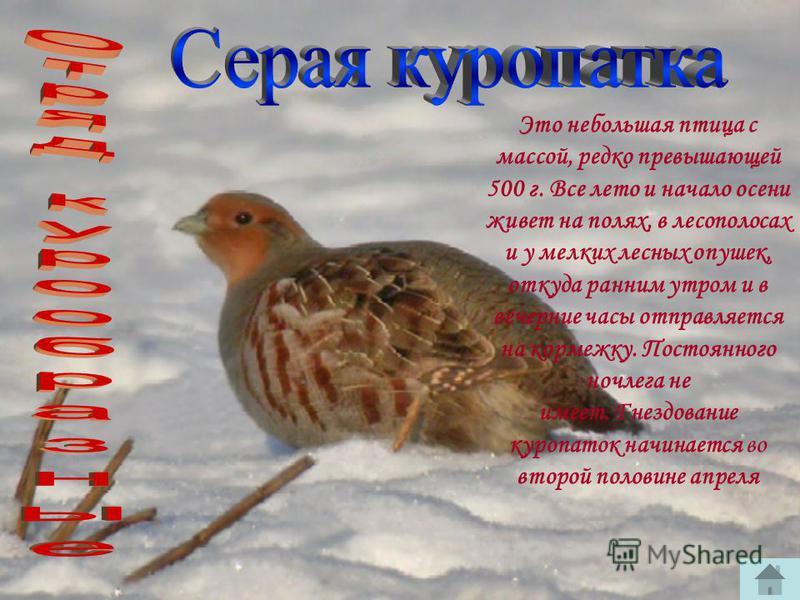 Kрупная птица массой до 6 кг и размахом крыла более метра. В Краснодарском крае встречается как гнездящийся вид в Приазовских плавнях, а в приморской части кубанских лиманов серые гуси остаются на зимовку. Кормятся серые гуси в основном на стерне, на