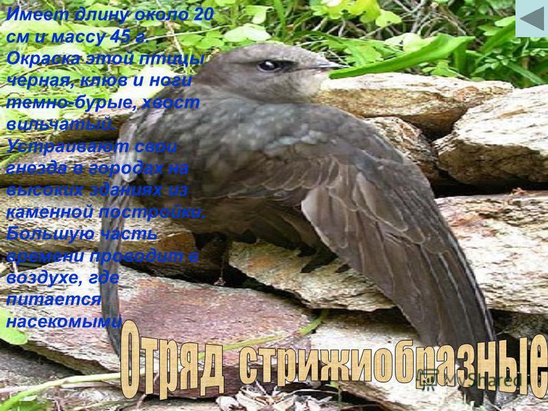 Птица средних размеров величиной несколько крупнее голубя. Длина тела около 35 см, а масса до 300 г. На голове хорошо выделяются длинные ушные пучки перьев, за что сова и получила свое название. Для гнезда часто занимает покинутые сороками гнезда, а