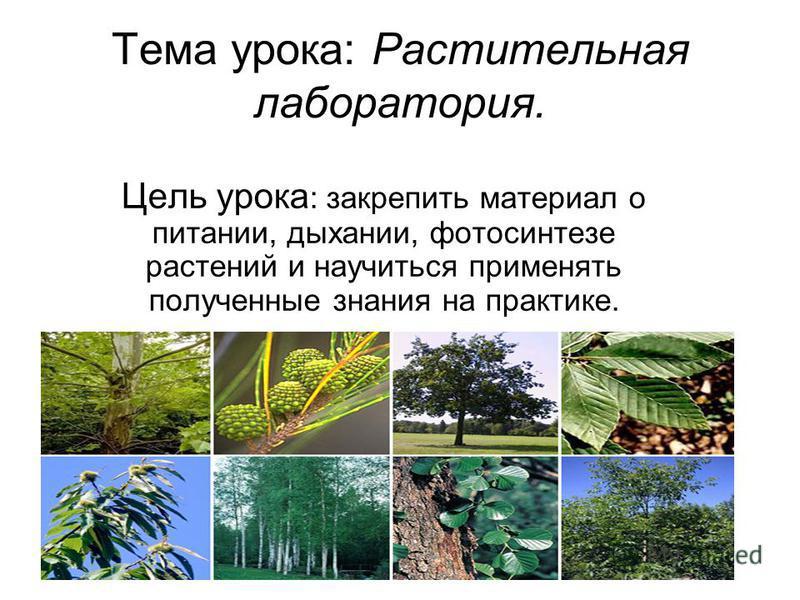 Тема урока: Растительная лаборатория. Цель урока : закрепить материал о питании, дыхании, фотосинтезе растений и научиться применять полученные знания на практике.