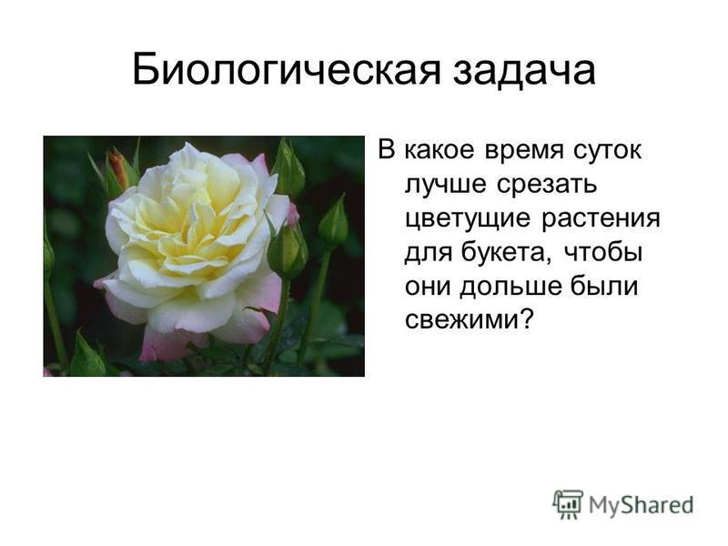 Биологическая задача В какое время суток лучше срезать цветущие растения для букета, чтобы они дольше были свежими?