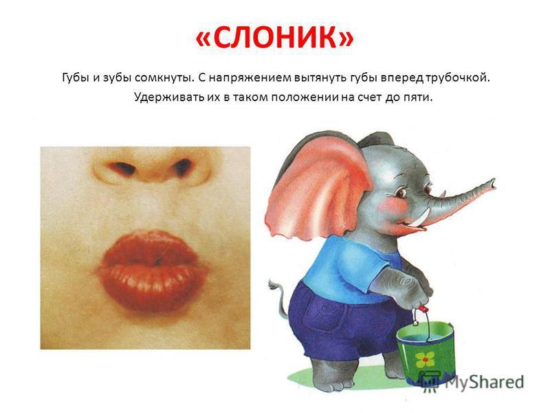 «СЛОНИК» Губы и зубы сомкнуты. С напряжением вытянуть губы вперед трубочкой. Удерживать их в таком положении на счет до пяти.
