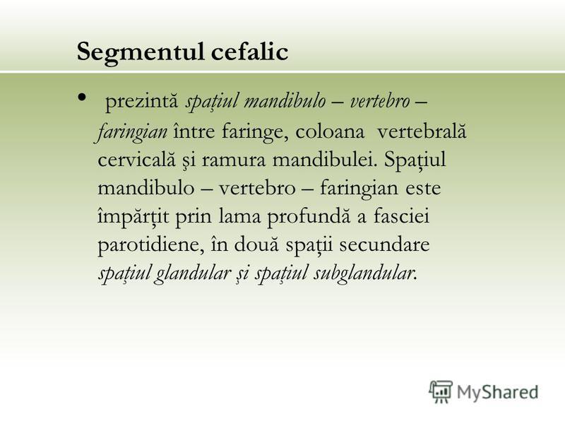 Segmentul cefalic prezintă spaţiul mandibulo – vertebro – faringian între faringe, coloana vertebrală cervicală şi ramura mandibulei. Spaţiul mandibulo – vertebro – faringian este împărţit prin lama profundă a fasciei parotidiene, în două spaţii secu