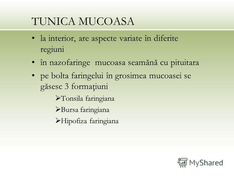TUNICA MUCOASA la interior, are aspecte variate în diferite regiuni în nazofaringe mucoasa seamănă cu pituitara pe bolta faringelui în grosimea mucoasei se găsesc 3 formaţiuni Tonsila faringiana Bursa faringiana Hipofiza faringiana