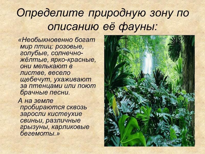 Определите природную зону по описанию её фауны: «Необыкновенно богат мир птиц: розовые, голубые, солнечно- жёлтые, ярко-красные, они мелькают в листве, весело щебечут, ухаживают за птенцами или поют брачные песни. А на земле пробираются сквозь заросл