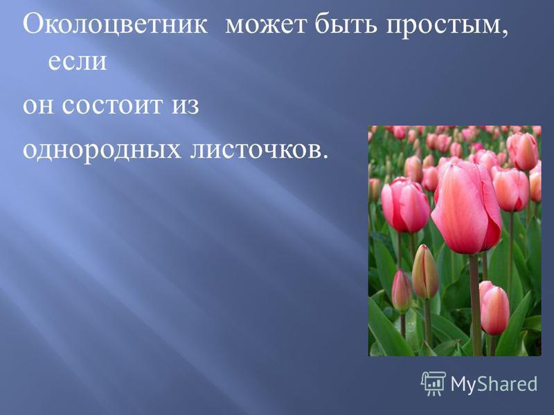 Околоцветник может быть простым, если он состоит из однородных листочков.