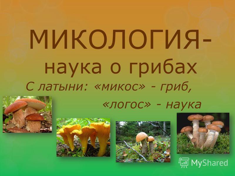 МИКОЛОГИЯ- наука о грибах С латыни: «микоз» - гриб, «логос» - наука