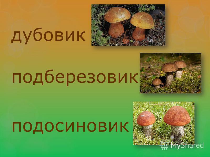 дубовик подберезовик подосиновик