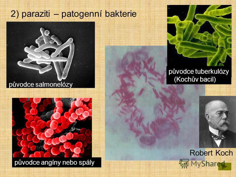 2) paraziti – patogenní bakterie původce salmonelózy původce angíny nebo spály původce tuberkulózy (Kochův bacil) Robert Koch