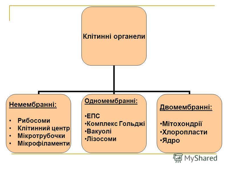 Клітинні органели Немембранні: Рибосоми Клітинний центр Мікротрубочки Мікрофіламенти Одномембранні: ЕПС Комплекс Гольджі Вакуолі Лізосоми Двомембранні: Мітохондрії Хлоропласти Ядро
