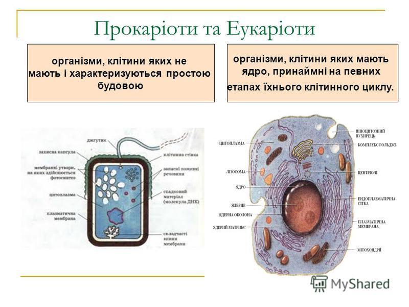 Прокаріоти та Еукаріоти організми, клітини яких мають ядро, принаймні на певних етапах їхнього клітинного циклу. організми, клітини яких не мають і характеризуються простою будовою