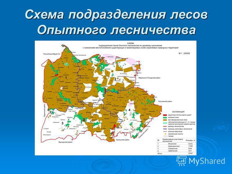 Схема подразделения лесов Опытного лесничества