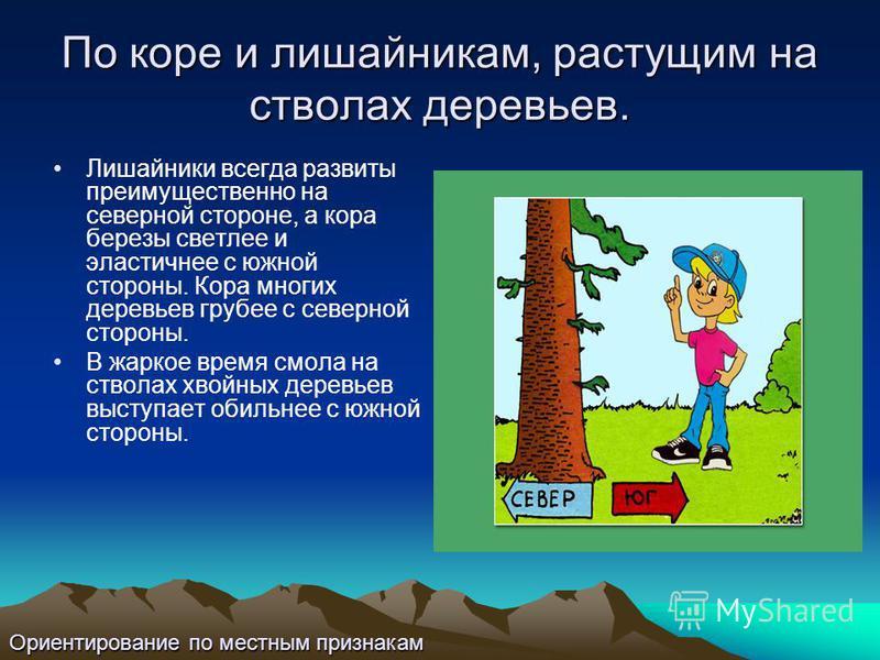 По коре и лишайникам, растущим на стволах деревьев. Лишайники всегда развиты преимущественно на северной стороне, а кора березы светлее и эластичнее с южной стороны. Кора многих деревьев грубее с северной стороны. В жаркое время смола на стволах хвой